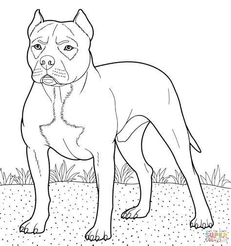 pitbull coloring page free printable coloring pages