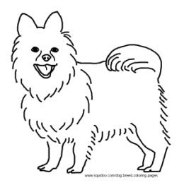 teacup pomeranian coloring page realistic coloring pages