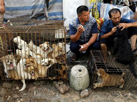 what do dogs taste like dogs were saved thanks to at the yulin festival business insider