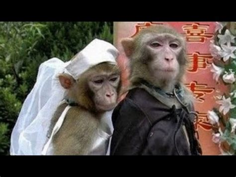 Getting Married by Animals Getting Married Animals