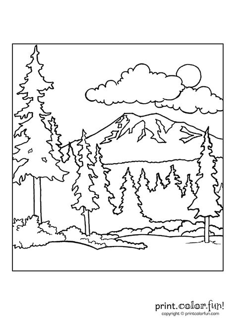 forest scene coloring page print color fun