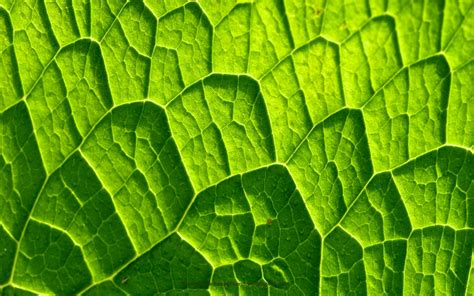 green wallpaper with leaf pattern leaf veins pattern texture flower desktop wallpaper