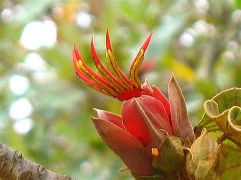 film jadul anggrek merah 29 gambar bunga dengan bentuk unik dan aneh satu jam