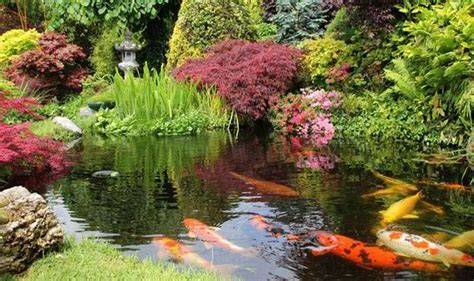 digging a backyard pond alan titchmarsh tips on creating a garden pond garden life style express co uk