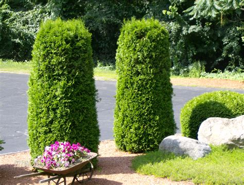 a and j landscaping c and j landscaping