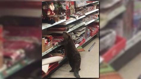 beaver caught christmas shopping at md dollar store