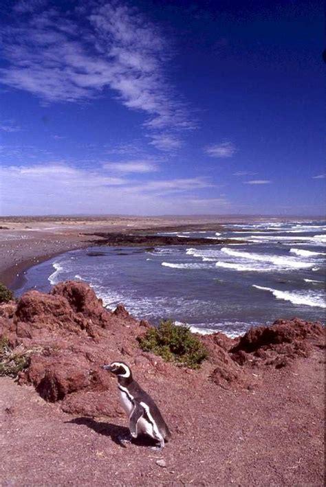 voli interni argentina trasporti in argentina patagonia dai voli interni al