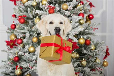 best christmas gifts for dogs 2017 dog training nation
