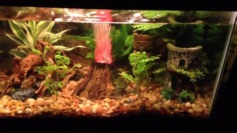 The Best 10 Gallon Fish Tank Ever   YouTube