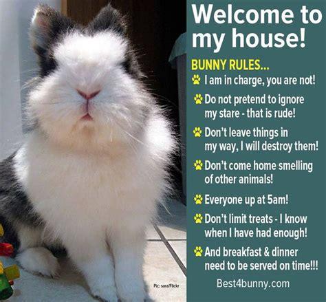 Rabbit Meme - bunny rules www best4bunny com rabbits pinterest