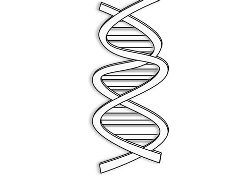 dna clipart cliparts co