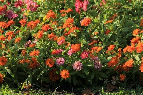 prevent weeds in flower beds preventing weeds in flower beds thriftyfun