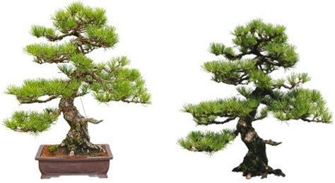 tree pics free bonsai tree free stock photos 12 870 free stock