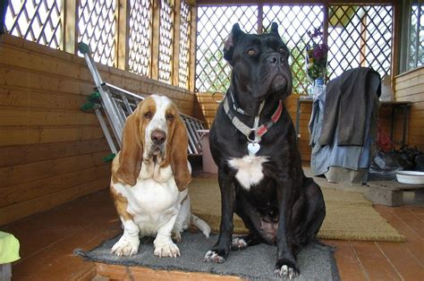 different races of dogs diff 233 rentes races de chiens photo photos de haute qualit 233