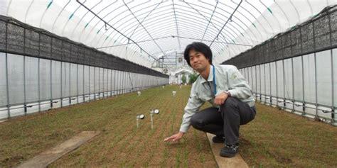 Benih Bayam Jepang By Rumah Benih rekayasa lingkungan untuk pertanian rumah kaca kompas