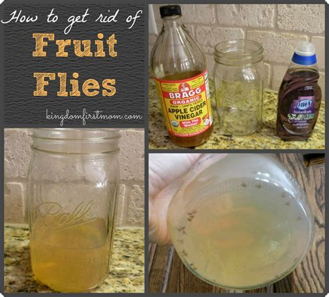 How Can I Get Rid Of Flies In Backyard by How To Get Rid Of Fruit Flies