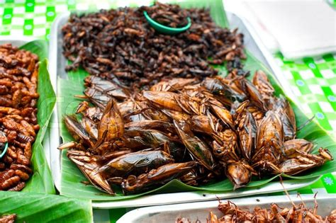 Would You Eat This Grasshopper Snack by Thai Food At Market Fried Insects Grasshopper For Snack