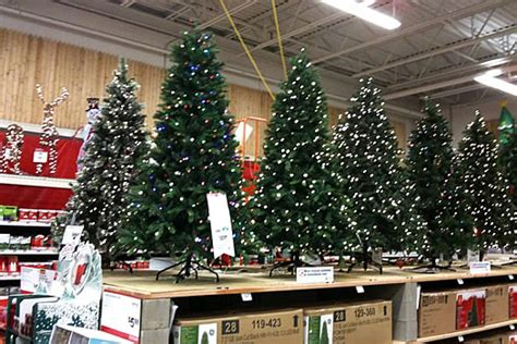 home depot small christmas trees in october all albany