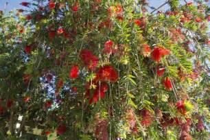 arbuste 224 feuillage persistant liste ooreka