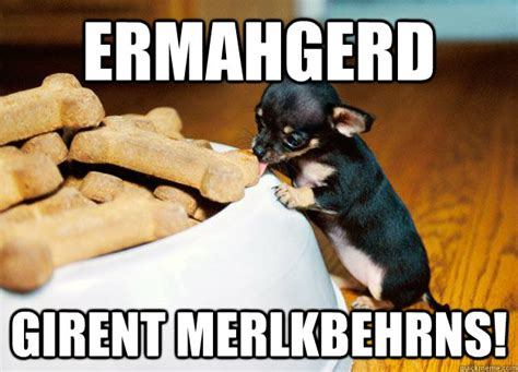 Ermahgerd Meme - ermahgerd girent merlkbehrns ermahgerd animals quickmeme