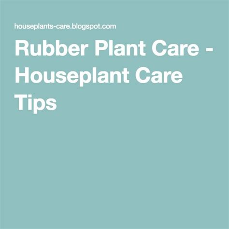 desk plant maintenance helpful tips to care for plants 1000 ideas about rubber plant care on pinterest rubber
