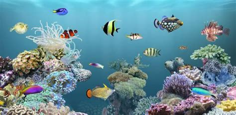 live wallpaper for pc aquarium best android live wallpaper tablet phones desktop