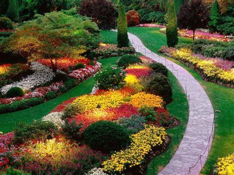 cespugli per giardino cespugli da giardino fioriti sempreverdi i nostri consigli