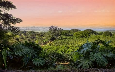 coffee plantation wallpaper to do in hawaii the ultimate vacation travel guide all