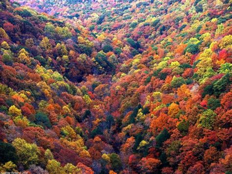 leaves changing colors fall halloween pinterest