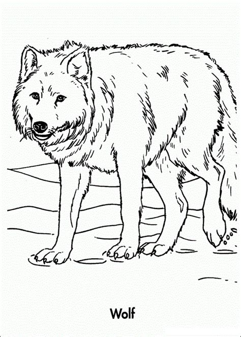 what color are wolves free anime wolf color coloring pages
