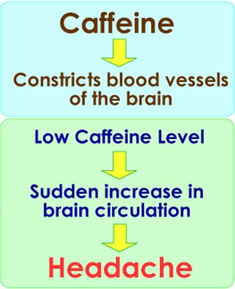 Side Effects From Detoxing Caffeine by Myths Facts About Caffeine Addiction And Health Side Effects