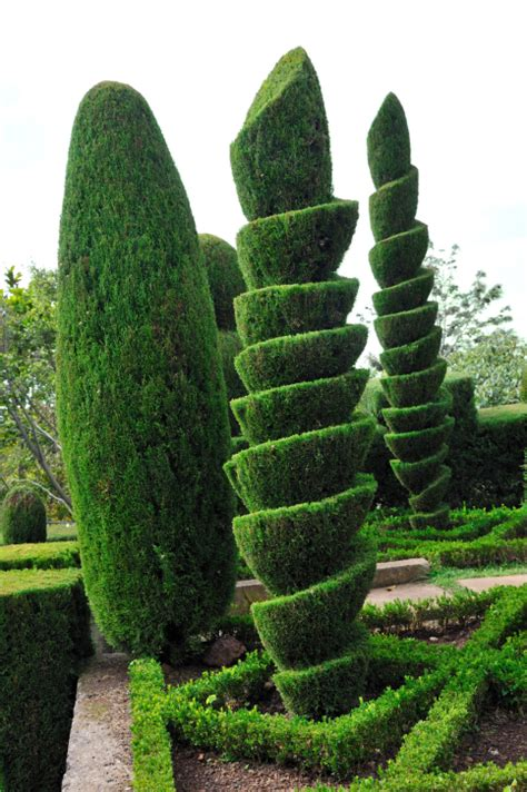 types of topiary trees 53 stunning topiary trees gardens plants and other shapes