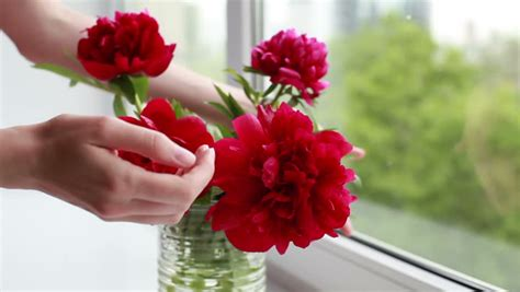 puts flowers in a vase stock footage 6356750