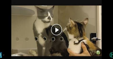 how to introduce a new to an aggressive lovable cats how to introduce a new cat to other cats and dogs lovable cats
