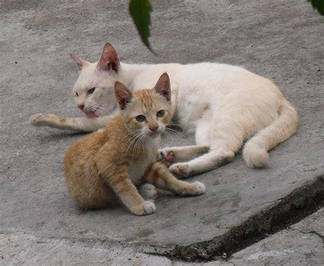 Kucing Ibu Dan Anak gambar kucing comel anak kucing comel dan ibunya