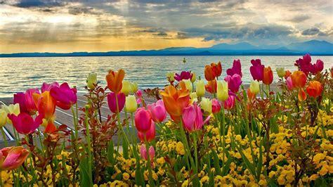 flowers sky nature light plant bloom hd wallpapers flower waratah flower australia plant closeup
