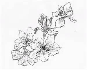 16 flower designs drawings images sakura flower drawing