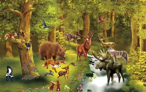 imagenes animales que viven en el bosque animales de bosque coniferas imagui