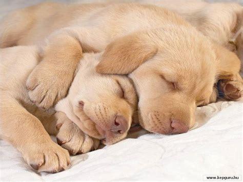 imagenes animales recien nacidos imagenes tiernas de perritos recien nacidos imagui