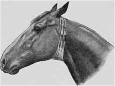 Cribbing Horses Treatment by Crib Biting