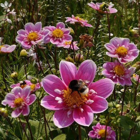 Garten Blumen by Gartenblumen Mit Hummel Foto Bild Pflanzen Pilze