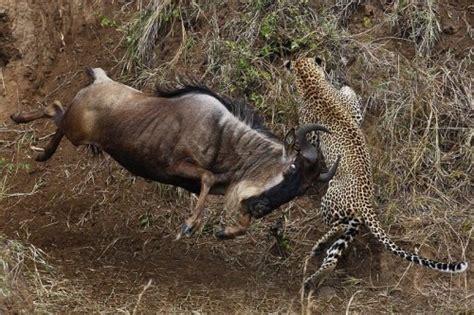 animals fighting animal zoo life animal fight animal fights animals