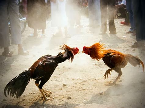 animals fighting cute funny animalz funny animals fighting 2014 images