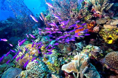 beautiful waterfalls: The Most Beautiful Underwater Tourism