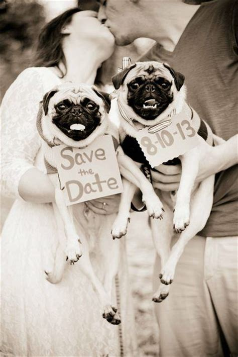 date with a pug pug save the date pugs pugs pugs save the date getting married and
