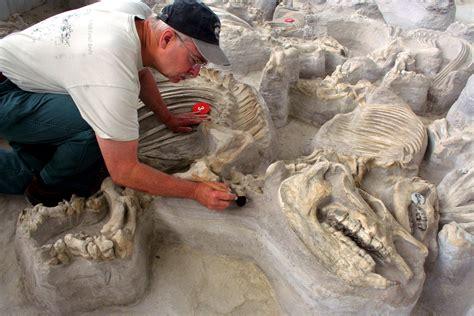ashfall fossil beds ashfall fossil beds state historical park travel northeast nebraska
