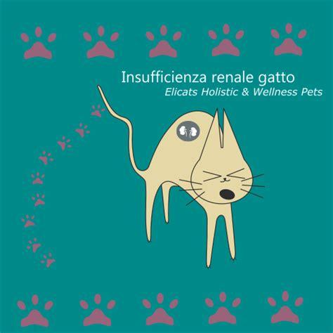 insufficienza renale alimentazione insufficienza renale gatto cure naturali nutraceutici