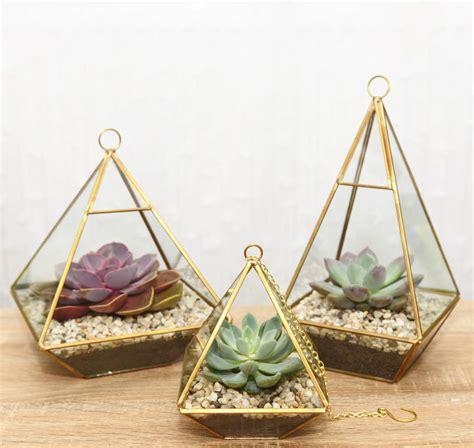 Succulent In Glass Vase by Geometric Glass Vase Succulent Terrarium By
