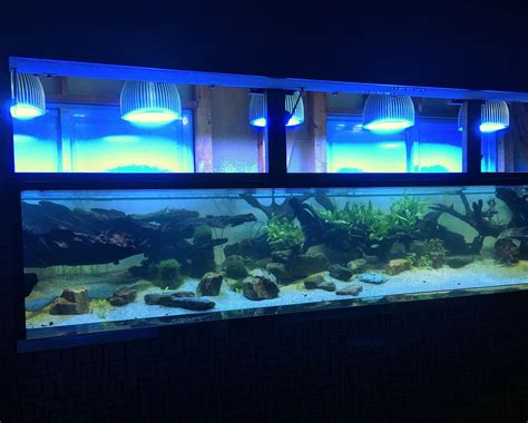 Led Aquarium Lighting aquarium led lighting photos best reef aquarium led