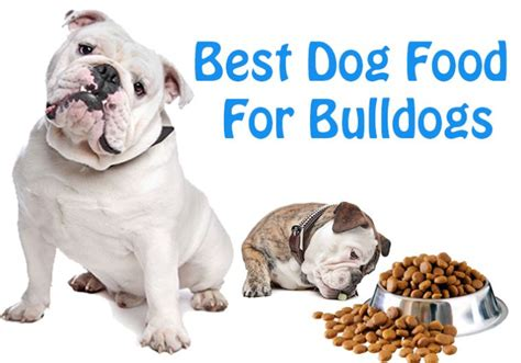 best food for bulldogs best food for bulldogs what every owner should jerusalem post